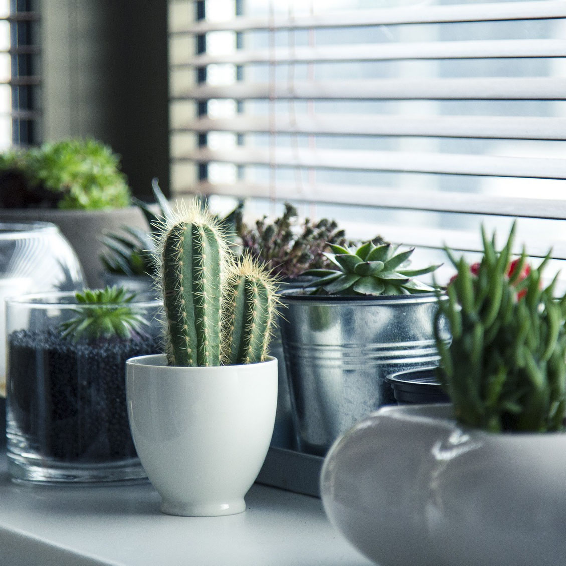 https://pixabay.com/en/pots-plants-cactus-succulent-shelf-716579/